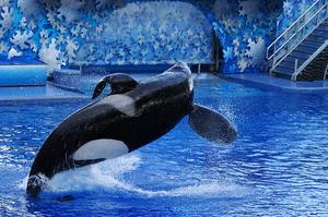 Фото: Wikimedia Commons На фото: Защитники животных поддержали законопроект, назвав его «победой для всех канадцев»