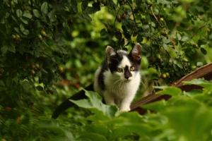 Фото: flickr.com На фото: Котенок забрел на территорию соседа, который решил его наказать