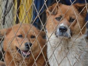 Фото: pxhere.com На фото: За последние три года Международное гуманитарное общество привезло в Канаду, США и Великобританию более 1,300 спасенных собак
