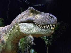 Фото: pxhere.com На фото: Jurassic Quest совмещает парк, музей и аттракционы
