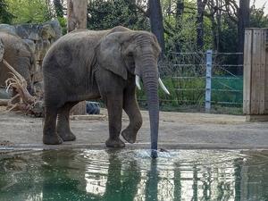 Фото: pixabay.com На фото: Многие посетители не подозревают о том, как развлечения вредят животным