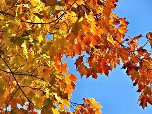 Фото: maxpixel.net На фото: В целом, Канаду ожидает достаточно мягкая осень