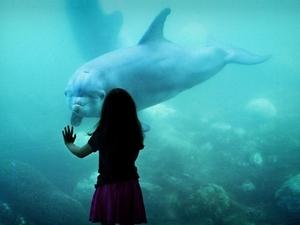 Фото: needpix.com На фото: Несмотря на недовольство многих океанариумов, защитников животных обрадовала эта новость